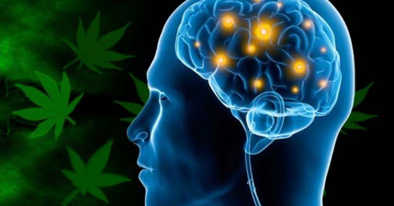 cannabis-alzheimers-768x403